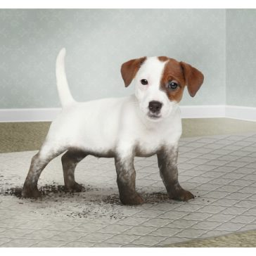 Designer Floor Protector with dirty puppy on it